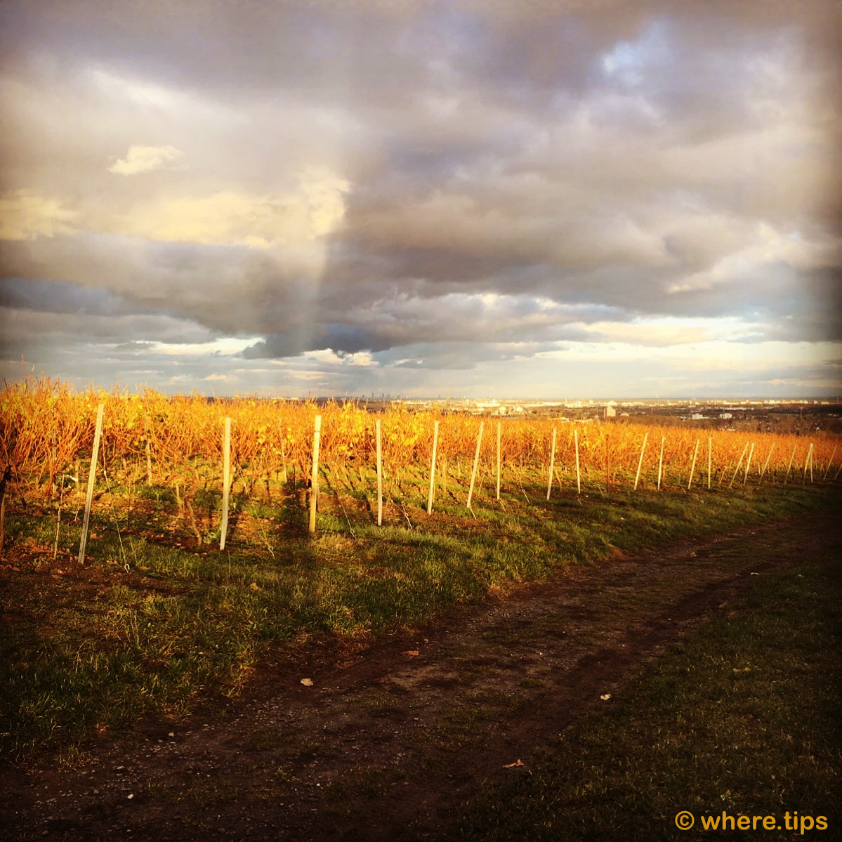 Vineyard Rheinhessen, Germany by where.tips